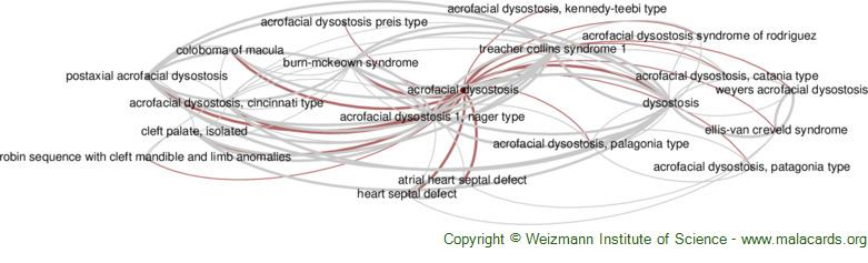 Diseases related to Acrofacial Dysostosis