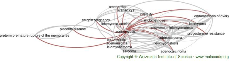 Diseases related to Adenomyosis