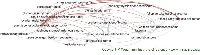 Diseases related to Adult Type Testicular Granulosa Cell Tumor