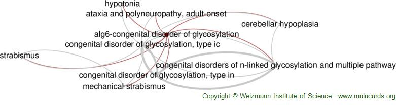Diseases related to Alg6-Congenital Disorder of Glycosylation