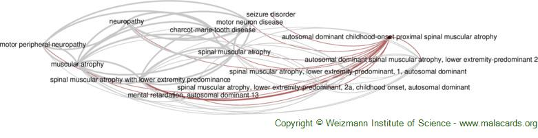 Diseases related to Autosomal Dominant Childhood-Onset Proximal Spinal Muscular Atrophy