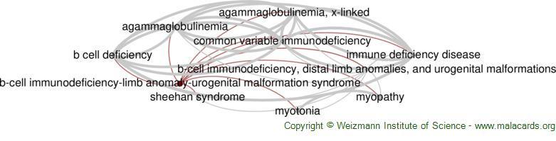 Diseases related to B-Cell Immunodeficiency-Limb Anomaly-Urogenital Malformation Syndrome