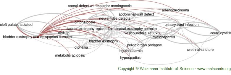 Diseases related to Bladder Exstrophy and Epispadias Complex