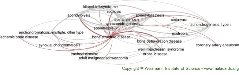 Diseases related to Bone Structure Disease