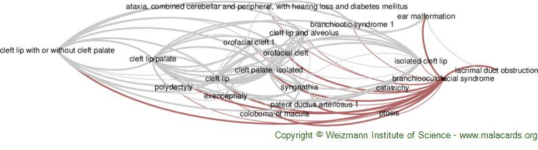 Diseases related to Branchiooculofacial Syndrome