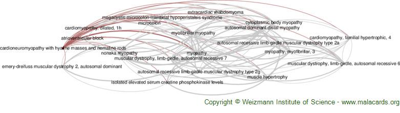Diseases related to Cardioneuromyopathy with Hyaline Masses and Nemaline Rods