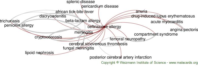 Diseases related to Ceftriaxone Allergy