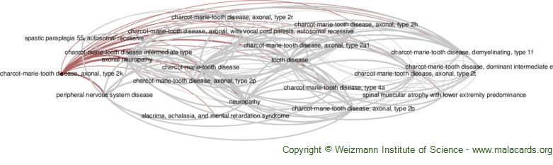 Diseases related to Charcot-Marie-Tooth Disease, Axonal, Type 2k