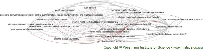 Diseases related to Charcot-Marie-Tooth Disease, Dominant Intermediate a