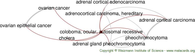 Diseases related to Coloboma, Ocular, Autosomal Recessive