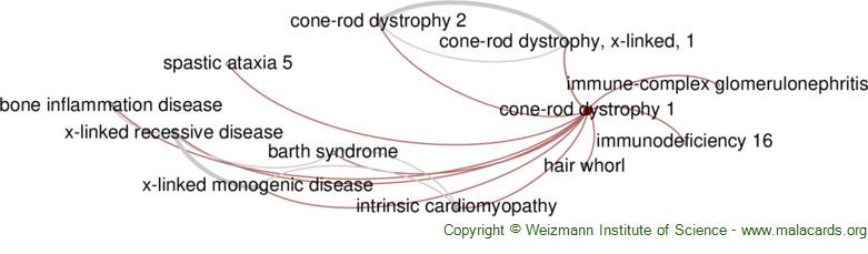 Diseases related to Cone-Rod Dystrophy 1