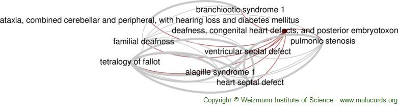 Diseases related to Deafness, Congenital Heart Defects, and Posterior Embryotoxon