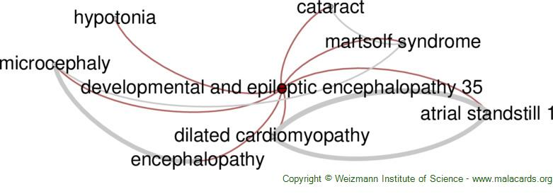 Diseases related to Developmental and Epileptic Encephalopathy 35