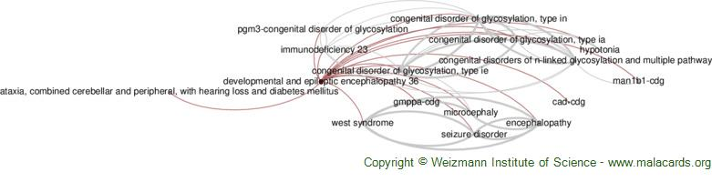 Diseases related to Developmental and Epileptic Encephalopathy 36