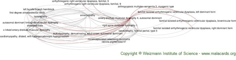 Diseases related to Emery-Dreifuss Muscular Dystrophy 4, Autosomal Dominant