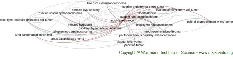 Diseases related to Epididymis Cancer