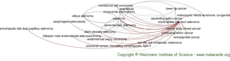 Diseases related to Extrahepatic Bile Duct Adenoma