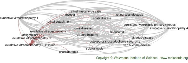 Diseases related to Exudative Vitreoretinopathy 2, X-Linked