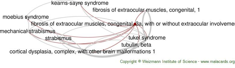 Diseases related to Fibrosis of Extraocular Muscles, Congenital, 3a, with or Without Extraocular Involvement
