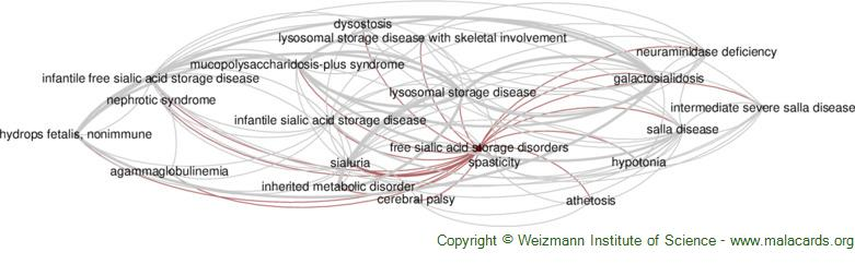 Diseases related to Free Sialic Acid Storage Disorders