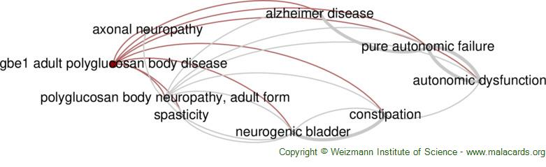 Diseases related to Gbe1 Adult Polyglucosan Body Disease