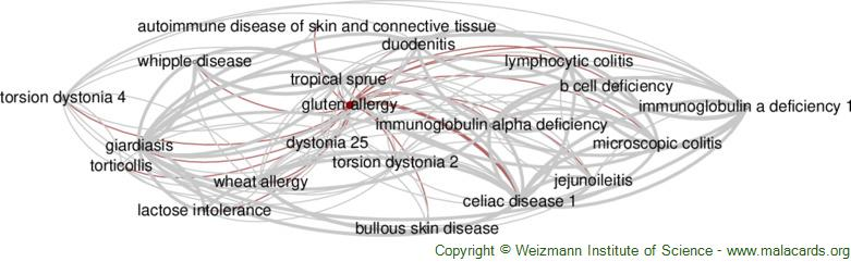 Diseases related to Gluten Allergy