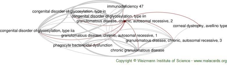 Diseases related to Granulomatous Disease, Chronic, Autosomal Recessive, 2