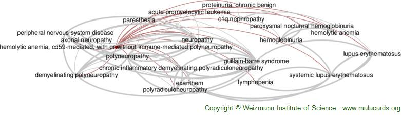 Diseases related to Hemolytic Anemia, Cd59-Mediated, with or Without Immune-Mediated Polyneuropathy