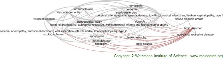 Diseases related to Htra1 Disorder