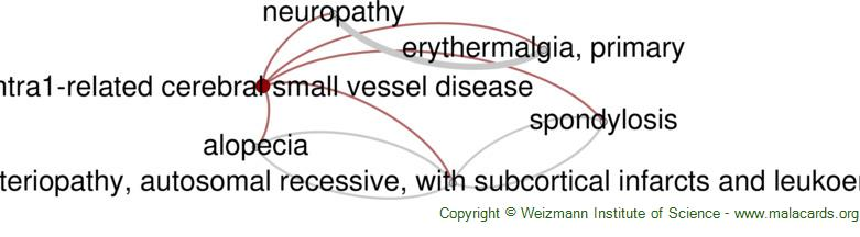 Diseases related to Htra1-Related Cerebral Small Vessel Disease