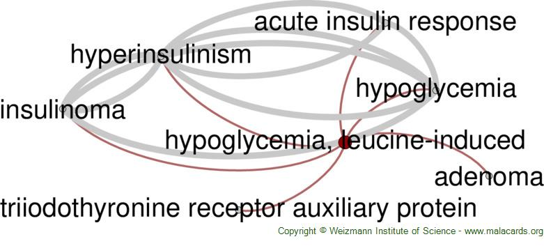 Diseases related to Hypoglycemia, Leucine-Induced