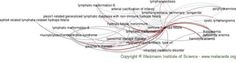 Diseases related to Immune Hydrops Fetalis