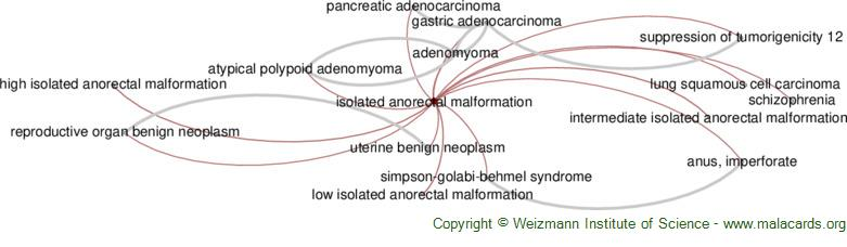 Diseases related to Isolated Anorectal Malformation
