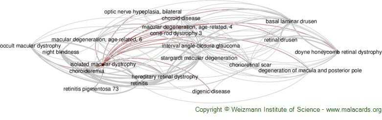 Diseases related to Isolated Macular Dystrophy