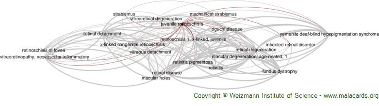 Diseases related to Juvenile Retinoschisis