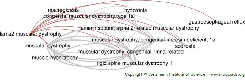 Diseases related to Lama2 Muscular Dystrophy