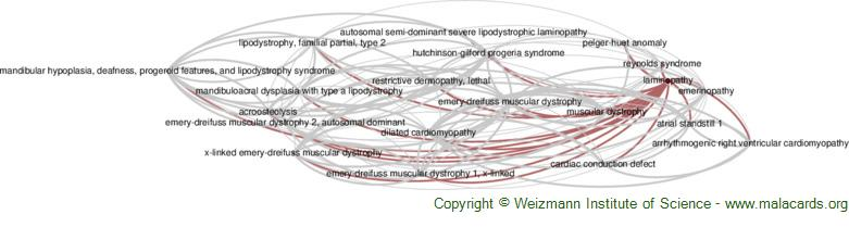 Diseases related to Laminopathy