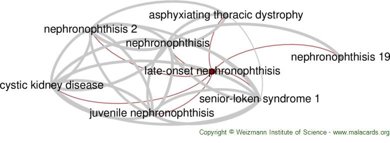 Diseases related to Late-Onset Nephronophthisis
