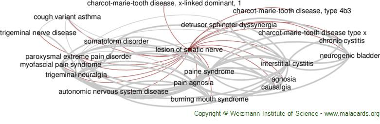 Diseases related to Lesion of Sciatic Nerve