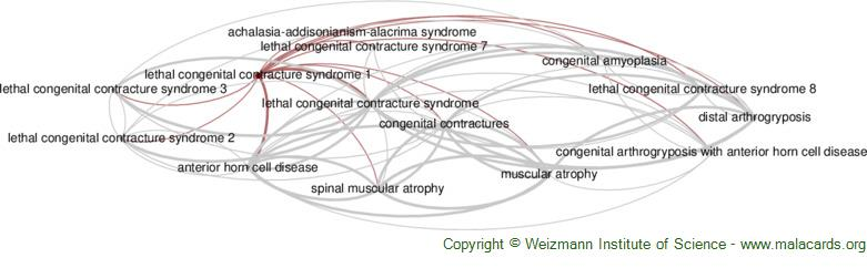 Diseases related to Lethal Congenital Contracture Syndrome 1