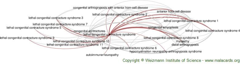 Diseases related to Lethal Congenital Contracture Syndrome
