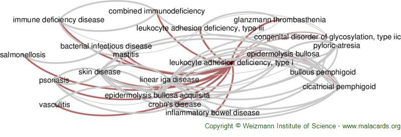 Diseases related to Leukocyte Adhesion Deficiency, Type I