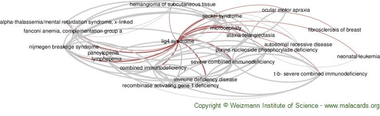 Diseases related to Lig4 Syndrome