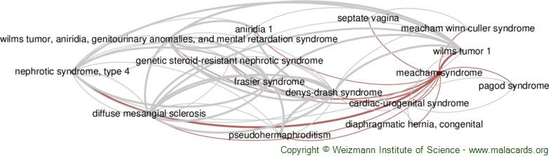 Diseases related to Meacham Syndrome
