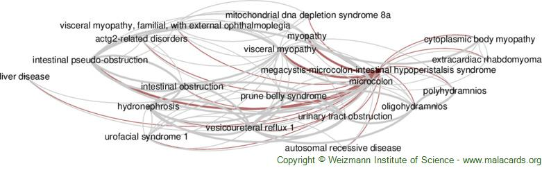 Diseases related to Megacystis-Microcolon-Intestinal Hypoperistalsis Syndrome