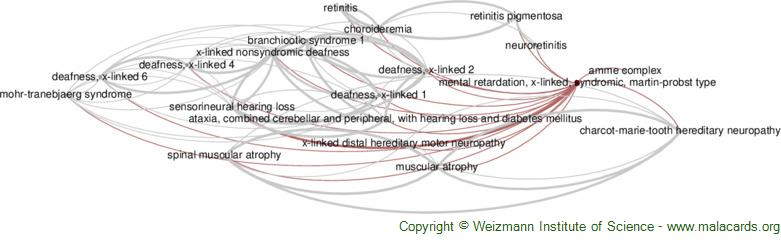 Diseases related to Mental Retardation, X-Linked, Syndromic, Martin-Probst Type