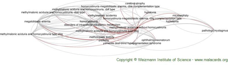 Diseases related to Methylmalonic Acidemia Without Homocystinuria