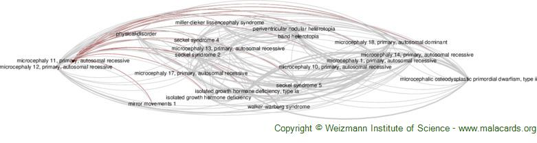 Diseases related to Microcephaly 11, Primary, Autosomal Recessive