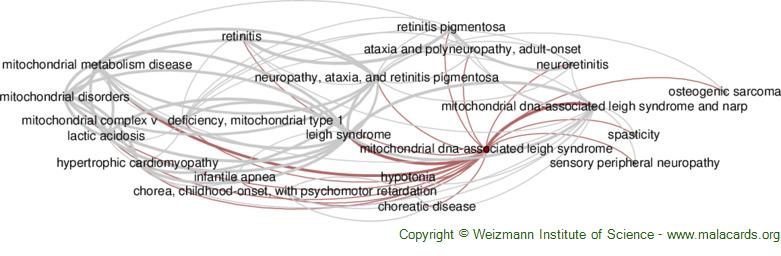 Diseases related to Mitochondrial Dna-Associated Leigh Syndrome