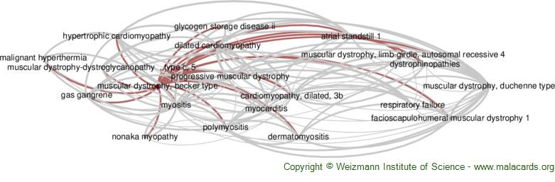 Diseases related to Muscular Dystrophy, Becker Type